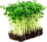 Микрозелень и беби лиф