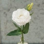 Подарок!Лизиантус (Эустома) F1 Mariachi pure white -5 драже