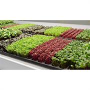 Салат листовой Лолло Росса - 1гр