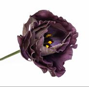 Подарок.Эустома(Лизиантус) Rosanne 1 Black Pearl - 5 драже
