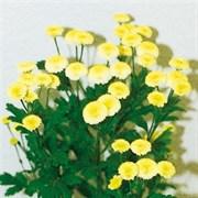 Матрикария Vegmo yellow - 10 драже