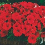 Петуния миллифлора Пикобелла Red-5драже