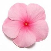 Катарантус гибридный ПацификаF1  XP blush -10шт