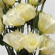 Эустома (Лизиантус) ABC 1 Yellow- 5 драже