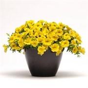Калибрахоа Kabloom yellow - 5 мдраже