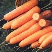 Морковь Нанте-1гр (профсемена)
