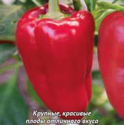 Перец сладкий Доминатор-0,25гр (профсемена)