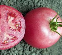 Томат индетерминантный розовый Пинк Парадайз F1 - 5шт (профсемена)