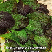Горчица салатная Садко-1гр (Ц/П)