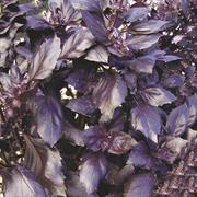 Базилик овощной Арарат-0,25гр (профсемена)
