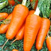 Морковь Рэд Кор - 1гр (профсемена)
