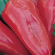 Перец сладкий Виктория - 0,25гр (профсемена)
