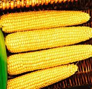 Кукуруза сахарная Мегатон F1 - 30шт (профсемена)