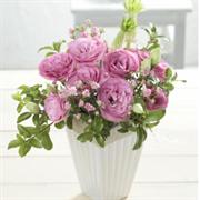 Эустома (Лизиантус) Robella 3 Clear Pink - 5 драже