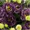 Подарок.Эустома(Лизиантус) Rosanne 1 Black Pearl - 5 драже - фото 11312