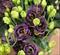 Подарок.Эустома(Лизиантус) Rosanne 1 Black Pearl - 5 драже - фото 11313