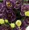 Подарок.Эустома(Лизиантус) Rosanne 1 Black Pearl - 5 драже - фото 11314